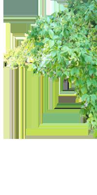 garten und landschaftsbau 49 163 7333699 michou service umz ge entr mpelungen. Black Bedroom Furniture Sets. Home Design Ideas